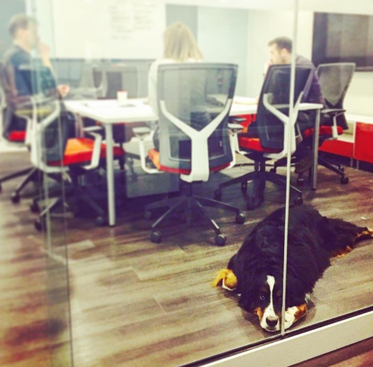 A typical meeting at Klipfolio