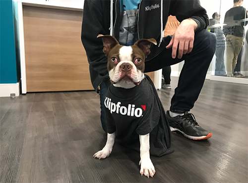 Bring your dog to the office